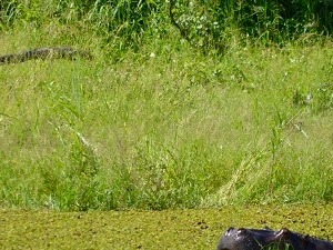 Hippo Trail - 10 Days Safari Photos