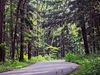 Hocking Hills State Park - Big Pine Lane - Ohio