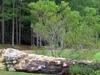 Hodges Gardens State Park