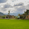 Hoi An Paddy Fields