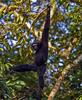 Hollongapar Gibbon Wildlife Sanctuary