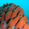 Horoirangi Marine Reserve - South Island - New Zealand