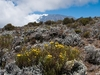 Horombo - Mount Kilimanjaro -