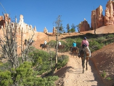 Horse Riding Is Available In The Park