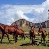 Easter Island Horseback Half Day