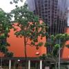 Hougang Mall.
