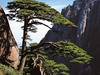 Huangshan Mountain Range Forest