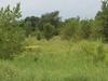 Humboldt  Iowa Marshland