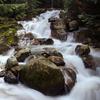 Humpback Trail Creek
