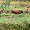 HuTiaoXia Farmers