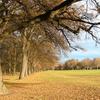 North Hagley Park In Autumn