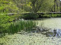 Hakone Jardín Botánico de Humedales