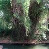 Hanuman River Ayikudi