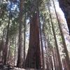 Hart Tree