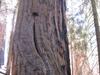 Hart  Tree View