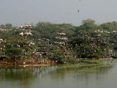 Heronry At  Uppalpadu