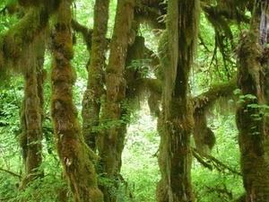 Salón de Musgos Trail