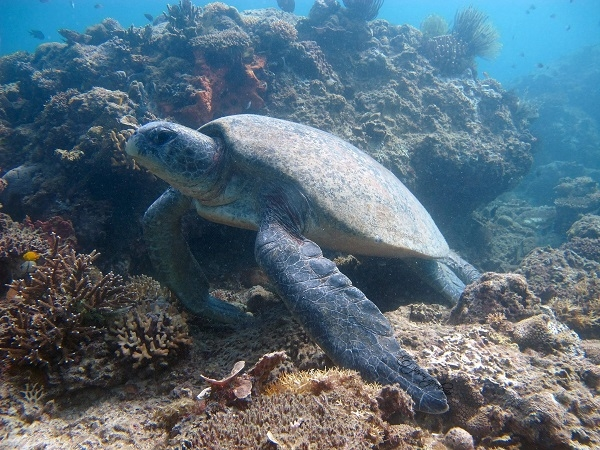 Diving Trips and PADI Courses Photos
