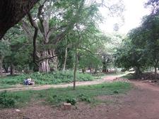 Cubbon Park Visitors - Bangalore