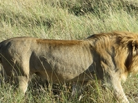 Tanzania Classic Safari 8 Days