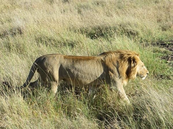 Tanzania Classic Safari 8 Days Photos