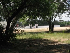Manekshaw Parade Ground Trees With Back-Wall