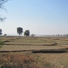 Moharli Gate Village Fields