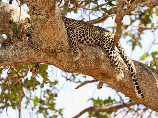 Tanzania Safaris Photos