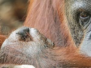 Orangutan Tour Super Deluxe Houseboat 3D2N Fotos