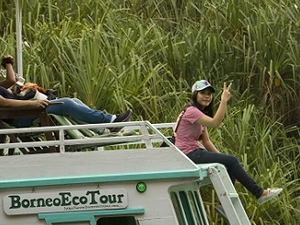 Orangutan Tour Deluxe BorneoEcoTour