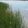 Stillwater National Wildlife Refuge Panorama