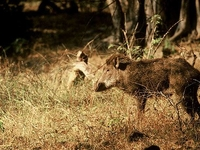 Haliday Island Wildlife Sanctuary