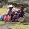 Indigenous Women - West Of Puno In Peru