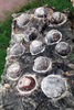 Indroda Fossil Park Indroda Eggs