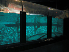 Indy Zoo Dolphin Tank