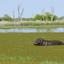 Inner Delta ,Okavango Delta