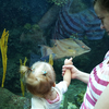 Interiour Of Aquarium