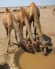 In The Deserts Of Ethiopia