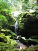 Ivindo National Park