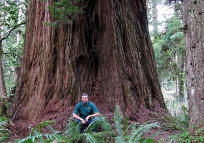 Iluvatar Tree