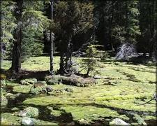 Imnaha Springs Oregon