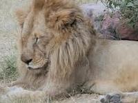 Jaipur Zoo