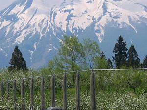 Monte Iwaki