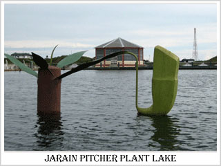 Jarain Pitcher Plant Lake Jaintia Hills District