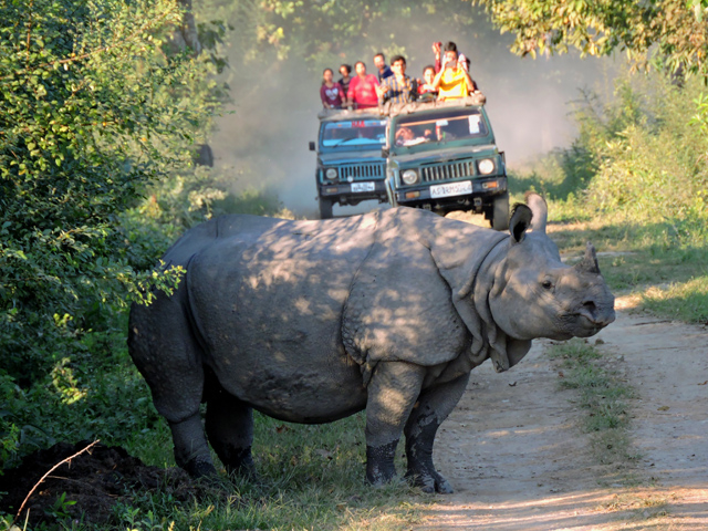 Kaziranga National Park Tour Photos