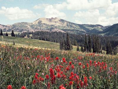 Jefferson Flowers
