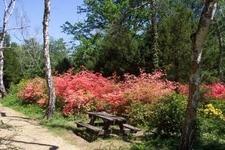 Jeli Arboretum-Kám