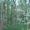 Jojoba Trail 511 - Tonto National Forest - Arizona - USA