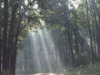 Dense Forest At Corbett