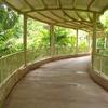 Jungle Island View